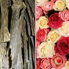 Rose des Sept Dormants